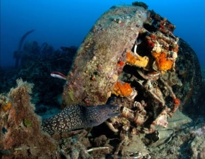 Divewise - Malta Discount Card - Diving Guide - Malta & Gozo Holidays and Local Discount Pass - Tourism map