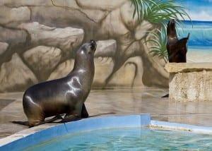 Mediterraneo Marine Park - Maltapass top attractions Guide - malta discount card - malta and gozo holiday guide